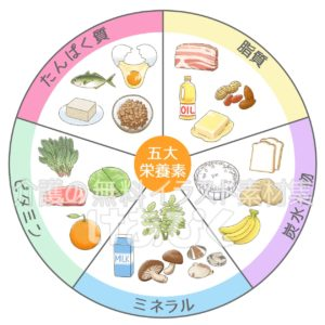 五大栄養素表のイラスト