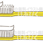 歯磨き粉の量のイラスト