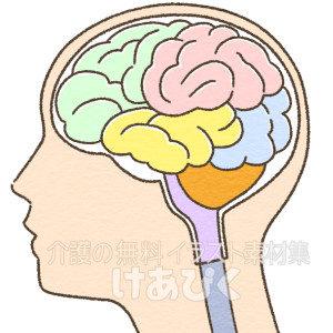 横から見た脳のイラスト(役割区分色分け)