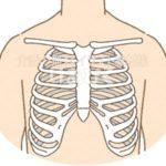 肋骨のイラスト