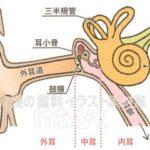 耳の構造のイラスト(文字あり)