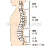 背骨のイラスト