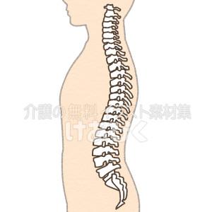背骨のイラスト(文字なし)